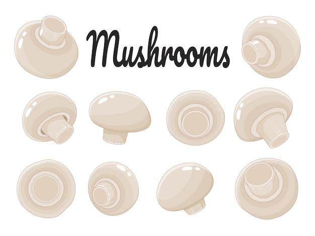Collection de champignons sur fond blanc. champignons. objet isolé sur fond blanc. style de bande dessinée.