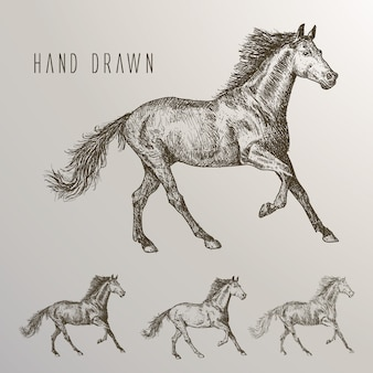 Collection de chevaux dessinée à la main