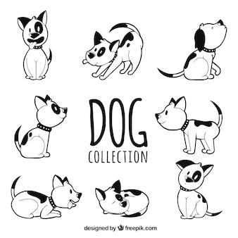 Collection de chien dessiné à la main dans huit positions différentes