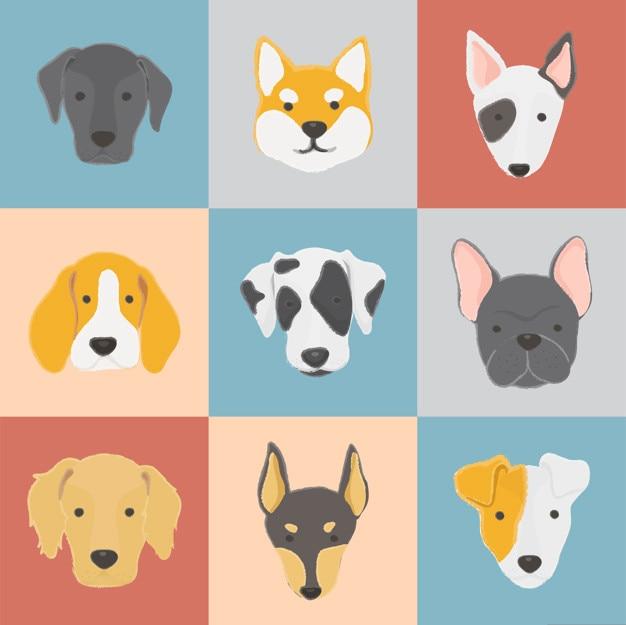 Collection de chien