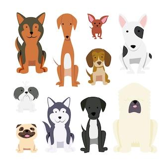 Collection de chiens