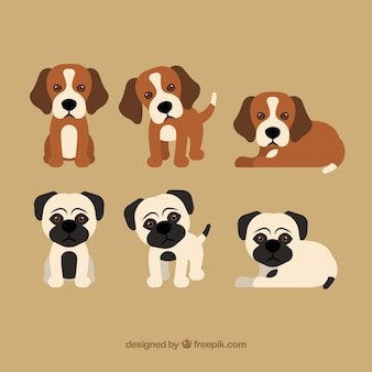 Collection de chiots mignons