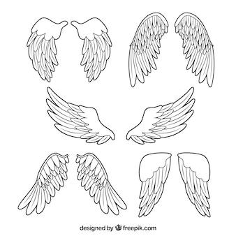 Collection avec cinq ailes décoratives