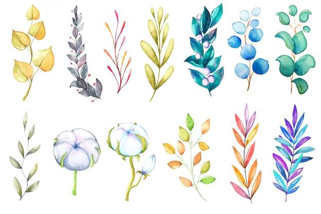 Collection colorée aquarelle de feuilles et de branches