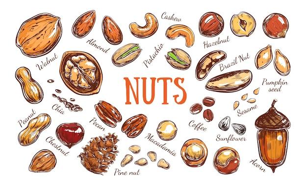 Collection colorée de noix et de graines