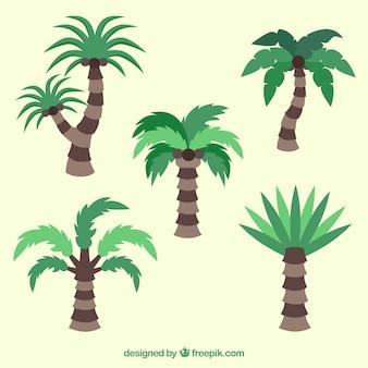 Collection de conception de palmier