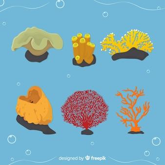 Collection de coraux plats