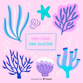 Collection de coraux