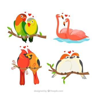 Collection de couple d'oiseaux pour la saint-valentin