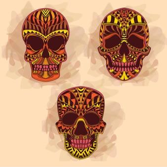 Collection de crâne