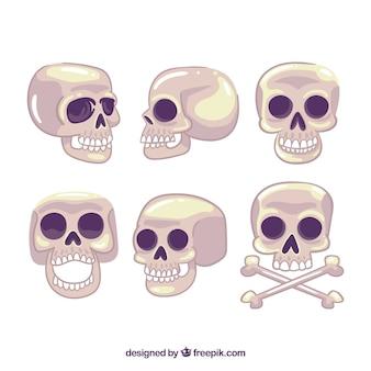 Collection de crânes dans différentes positions