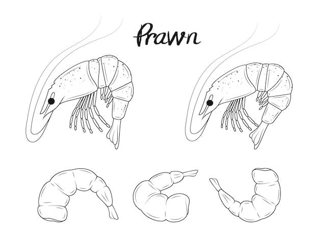 Collection de crevettes dessinées à la main. fruit de mer. objets isolés. noir et blanc.