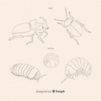 Collection de croquis de coléoptères dessinés à la main