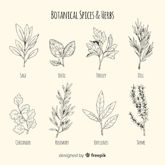 Collection de croquis d'épices et d'herbes dessinés à la main réaliste