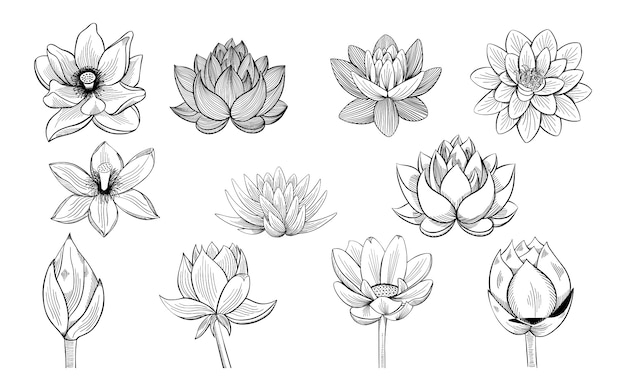 Collection de croquis de lotus.