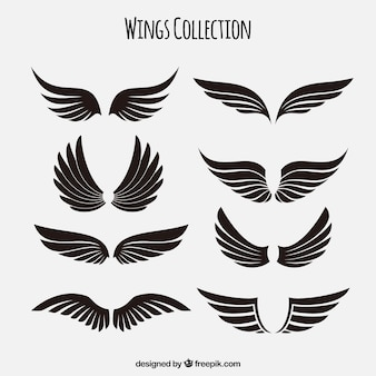 Collection d'ailes noires