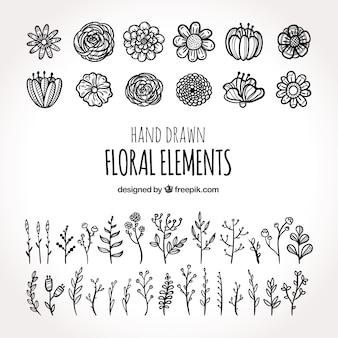 Collection d'éléments floraux avec différentes espèces