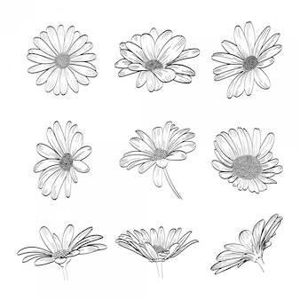 Collection daisy hand drawn