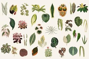 Collection de feuilles