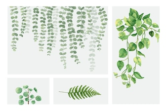 Collection de plantes dessinés à la main, isolé sur fond blanc