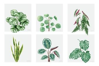 Collection de plantes dessinés à la main, isolé sur fond blanc