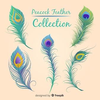 Collection de plumes de paon dessinés à la main moderne