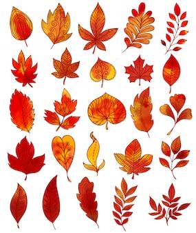 Collection dessinée à la main de feuillage d'automne