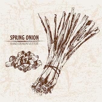 Collection dessinée à la main d'oignons de printemps