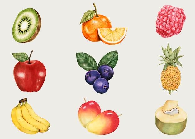 Collection dessinée à la main de vecteur vintage de fruits d'été