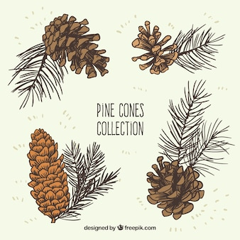 Collection dessinés à la main des pommes de pin