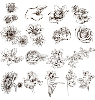 Collection de dessins au trait de fleurs vintage
