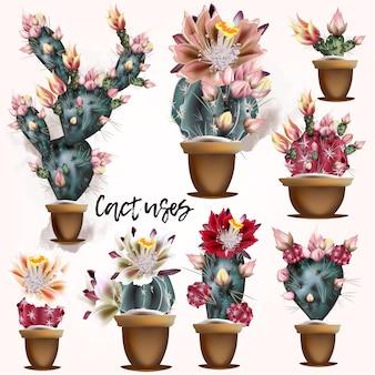 Collection de dessins de cactus