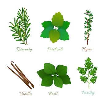 Collection détaillée d'herbes d'huile essentielle