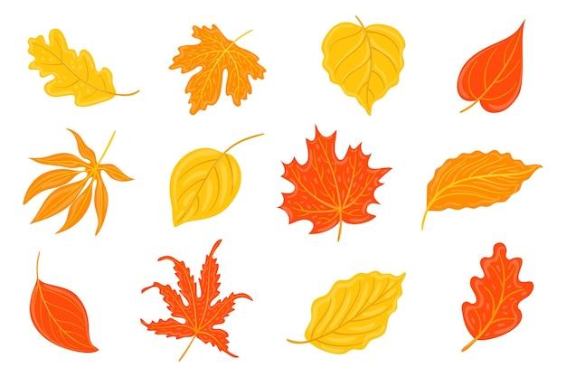 Collection de différentes feuilles d'automne