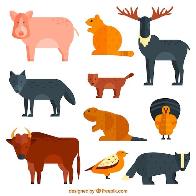Collection de différents animaux sauvages
