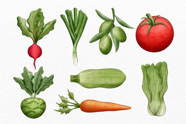 Collection de différents légumes illustrés