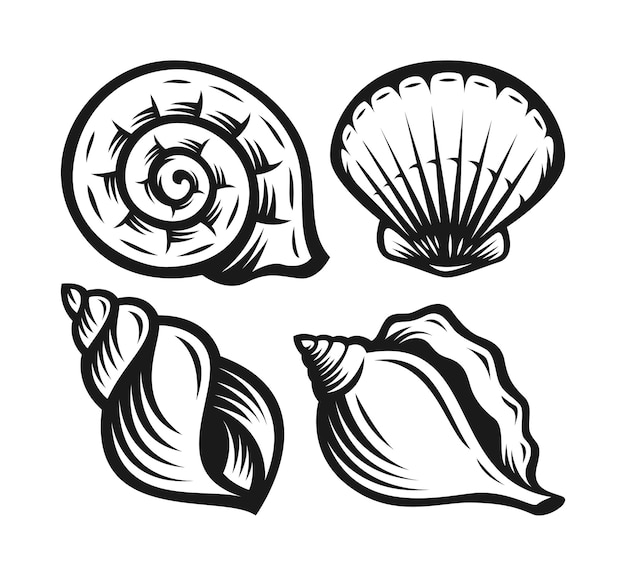 Collection de divers coquillages de mollusques.