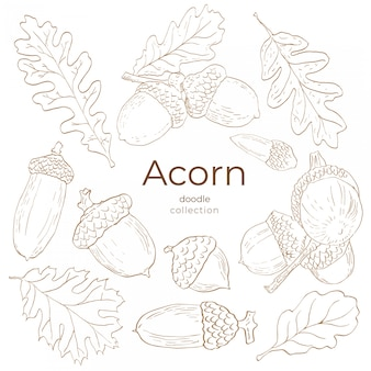 Collection doodle acorn