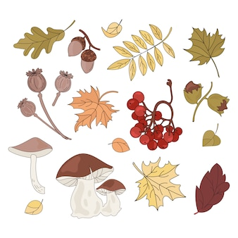 Collection d'éléments autumn forest