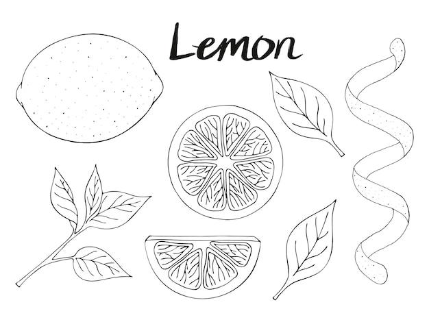 Collection d'éléments dessinés à la main, citron, feuilles et tranche. objets d'emballage, publicités. image isolée.