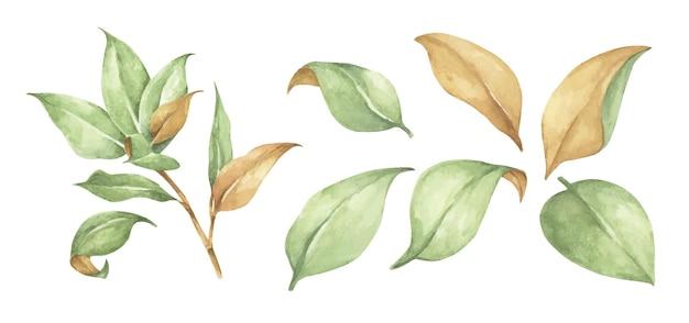 Collection d'éléments de feuilles vertes