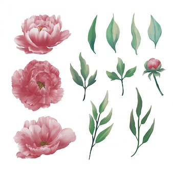 Collection d'éléments de fleurs de pivoine aquarelle