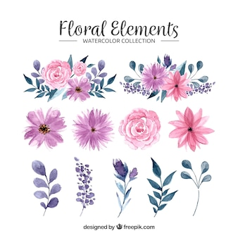 Collection d'éléments floraux aquarelle