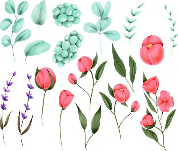 Collection d'éléments floraux peints à la main