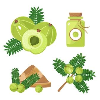 Collection d'éléments de fruits amla plat bio