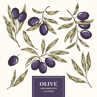 Collection d'éléments d'olive