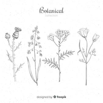 Collection d'épices botaniques et d'herbes dessinées à la main
