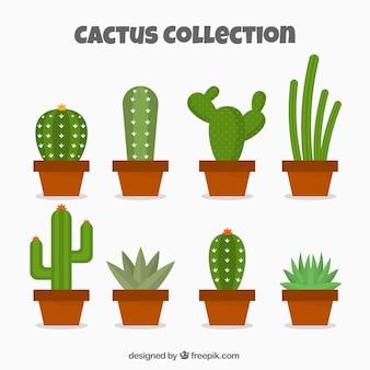 Collection exotique de cactus