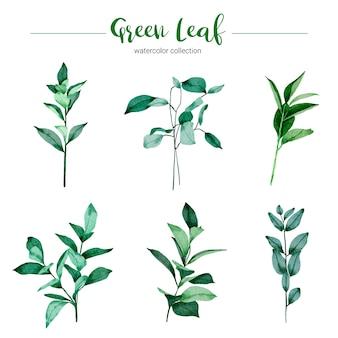 Collection de feuille verte illustration aquarelle