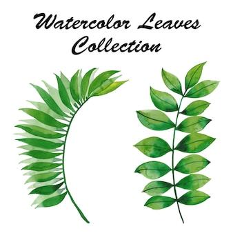 Collection de feuilles d'aquarelle